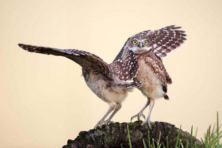 concurso fotos engracadas vida selvagem 13