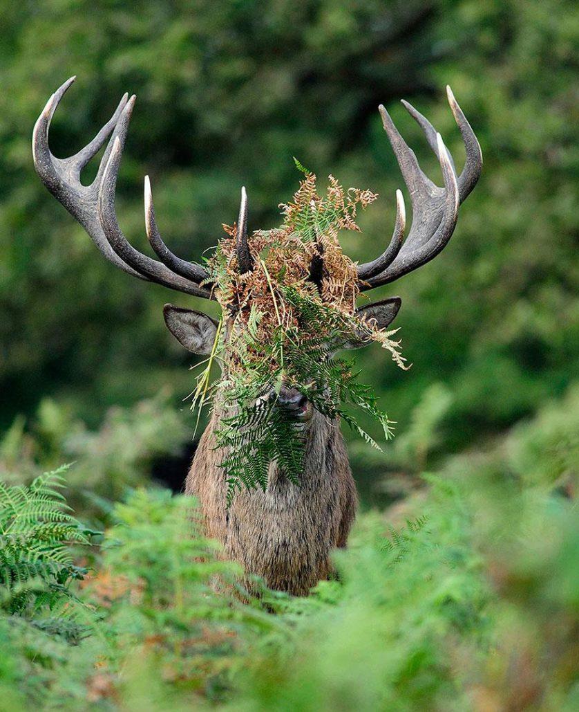 concurso fotos engracadas vida selvagem 2