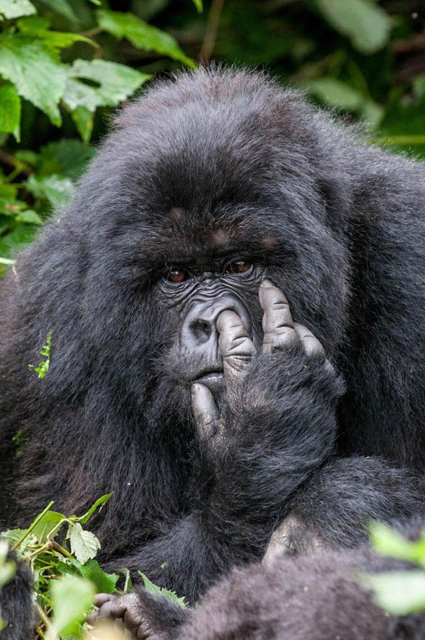 concurso fotos engracadas vida selvagem 3