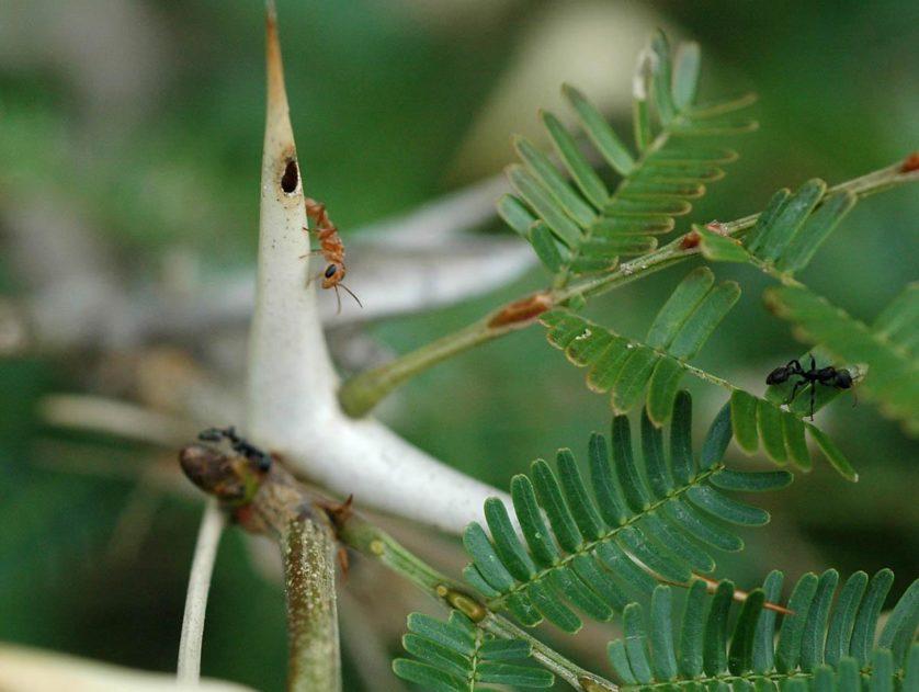 plantas malevolas 5