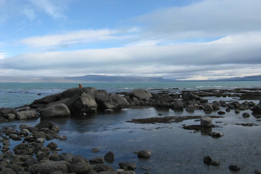 plesiossauro patagonia (2)