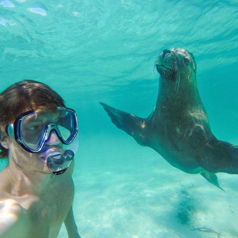 selfies engracadas com animais (2)
