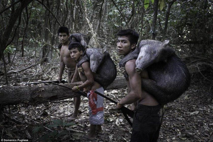 tribo amazonica awa (8)