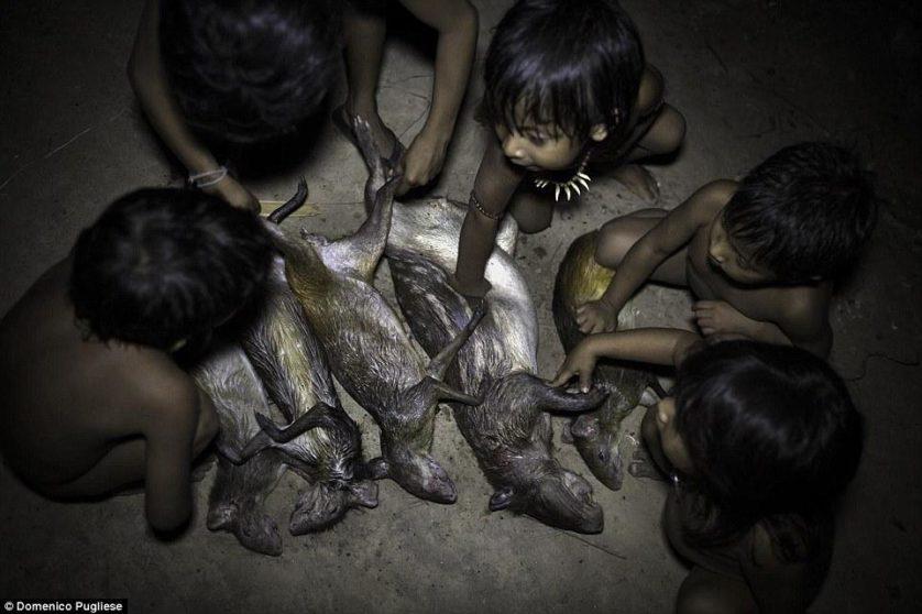 tribo amazonica awa (9)