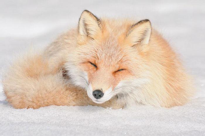 animais fofos japao 5--