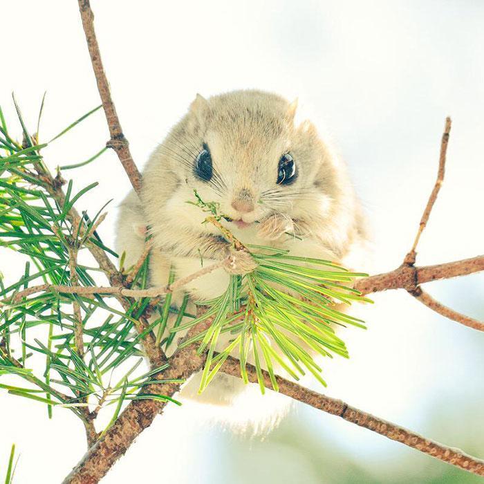 animais fofos japao 7---