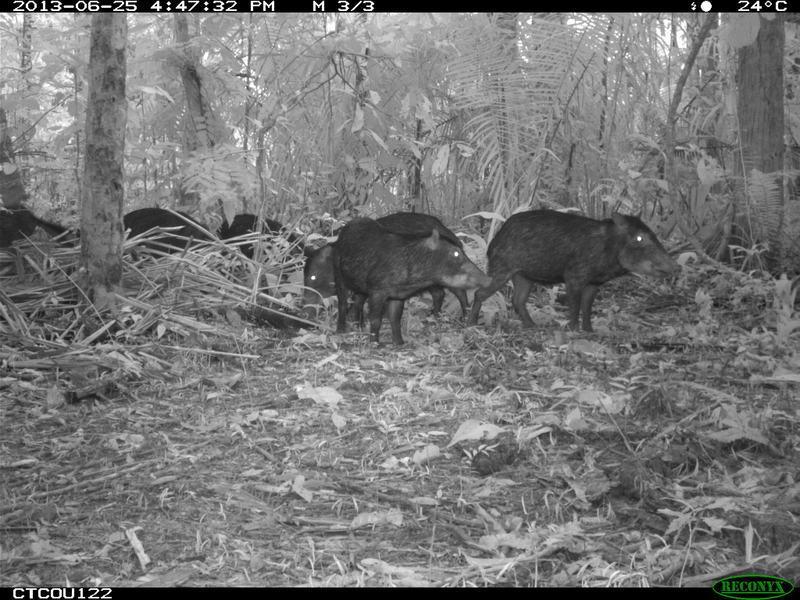 animais selfies preservacao florestas tropicais 1