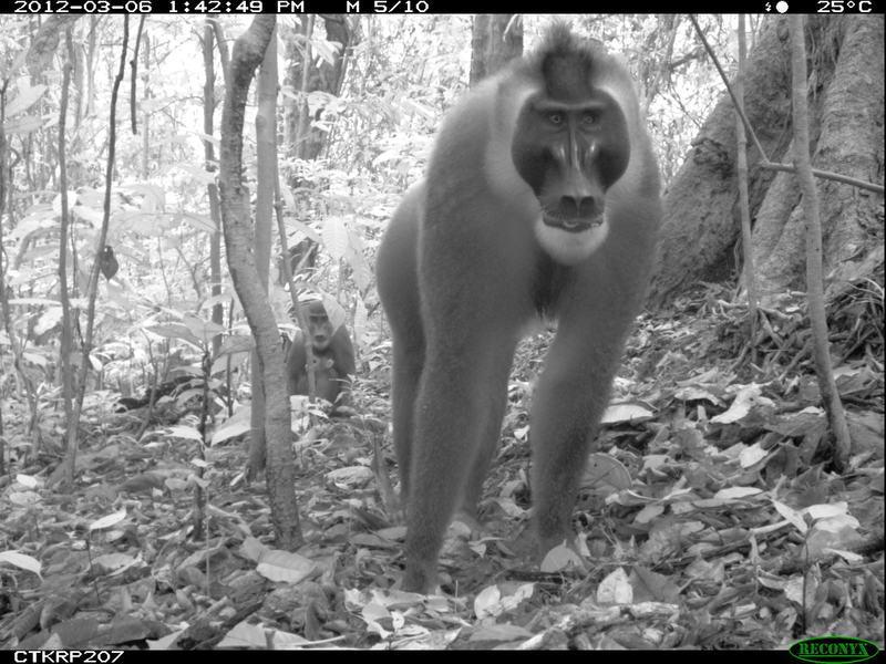 animais selfies preservacao florestas tropicais 10