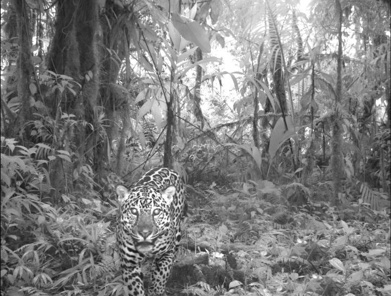 animais selfies preservacao florestas tropicais 11