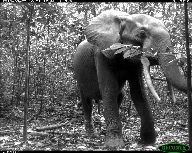 animais selfies preservacao florestas tropicais 2