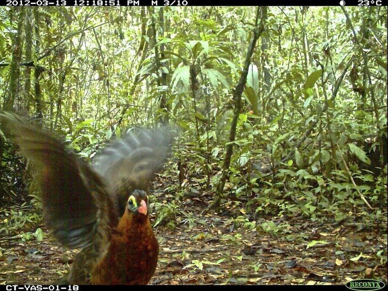 animais selfies preservacao florestas tropicais 7