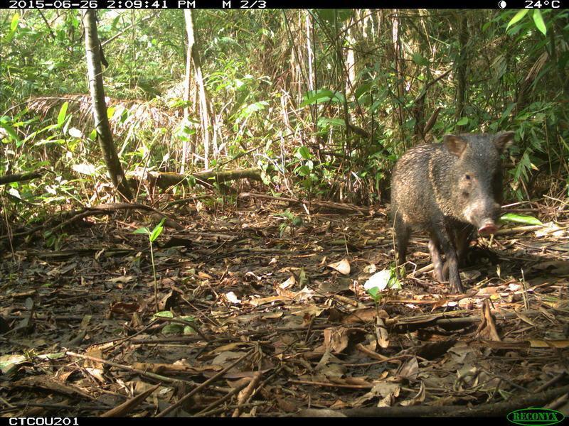 animais selfies preservacao florestas tropicais 8