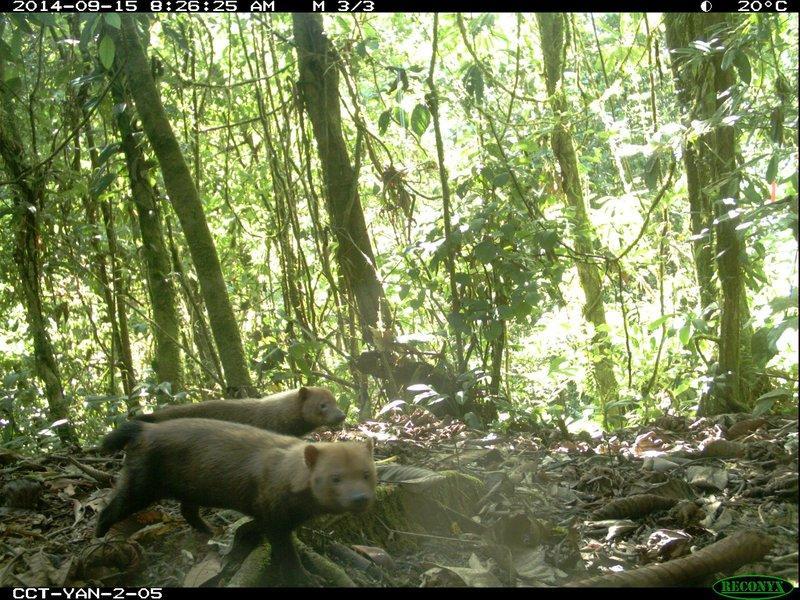 animais selfies preservacao florestas tropicais 9