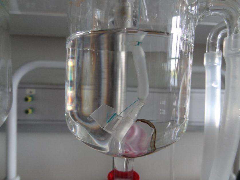 partes do corpo orgaos feitos em lab 9