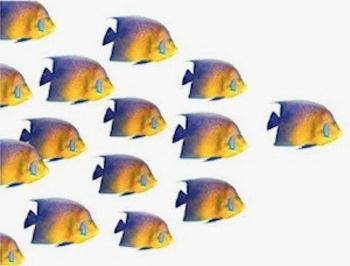 O primeiro peixe está liderando o grupo ou sendo perseguido?