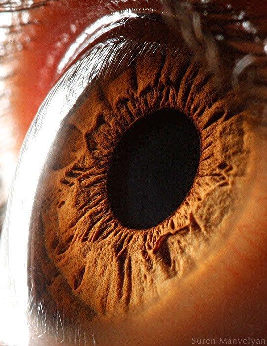 closes olho humano (15)