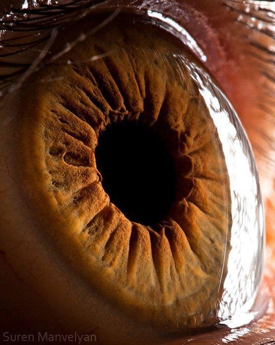 closes olho humano (17)