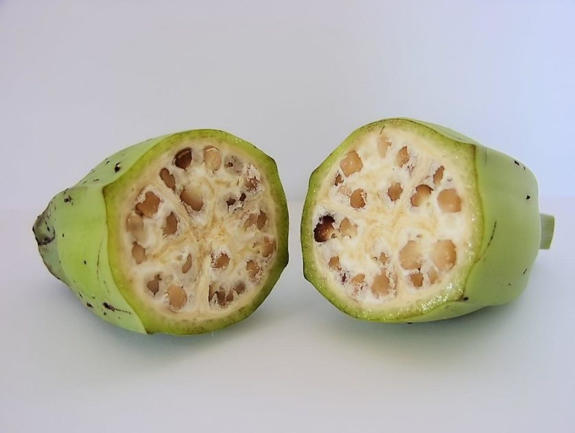 frutas e legumes diferentes modificacao genetica 2