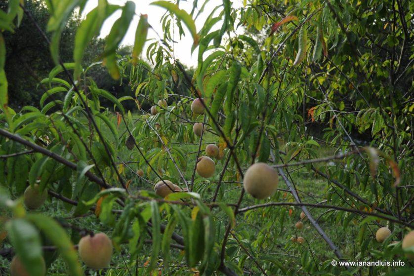 frutas e legumes diferentes modificacao genetica 6