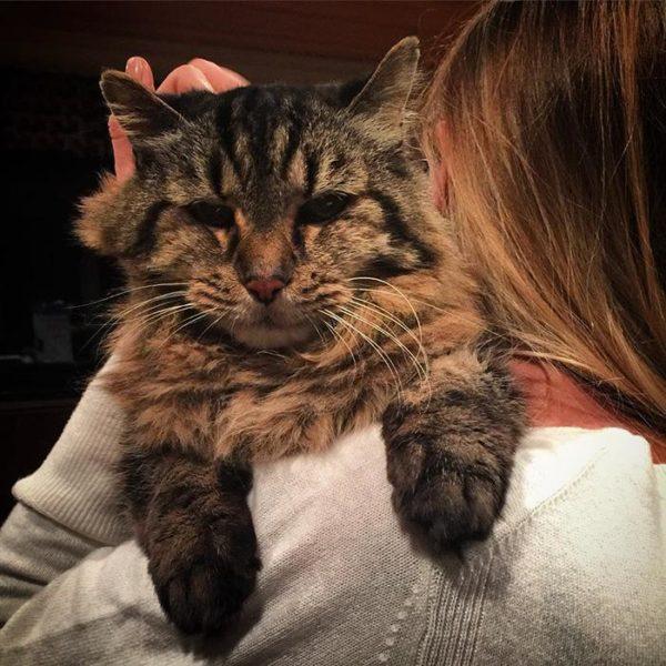 oldest-cat-living-guinness-world-records-corduroy-55