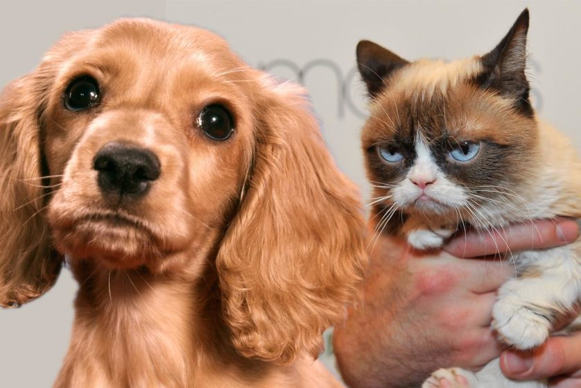 quem ama mais caes ou gatos