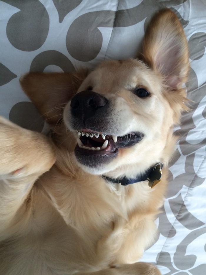 cachorro usando aparelho nos dentes (5)