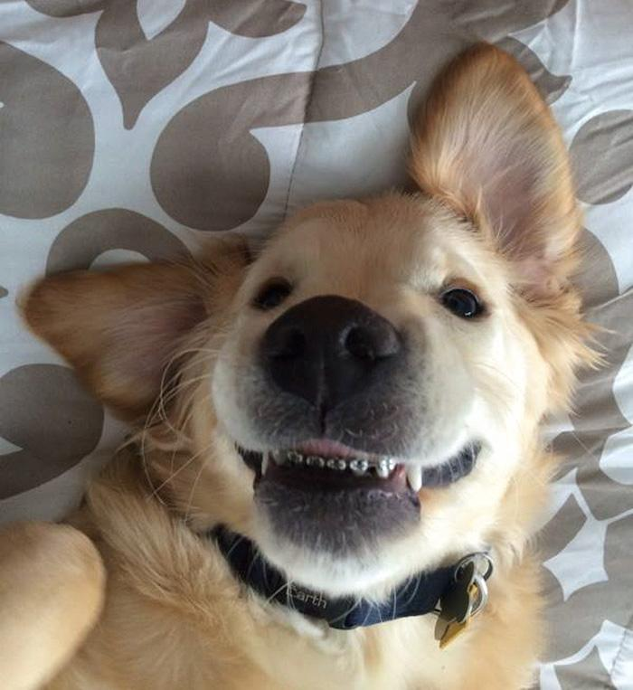cachorro usando aparelho nos dentes (6)