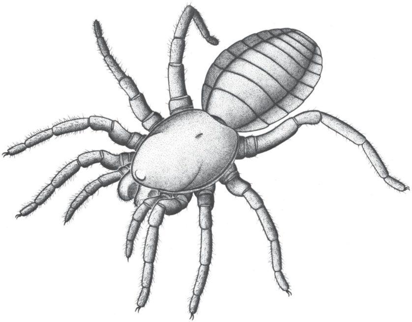 fossil-bizarro-mostra-origens-das-aranhas-2