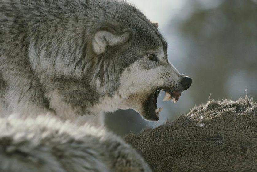 mitos sobre animais 2