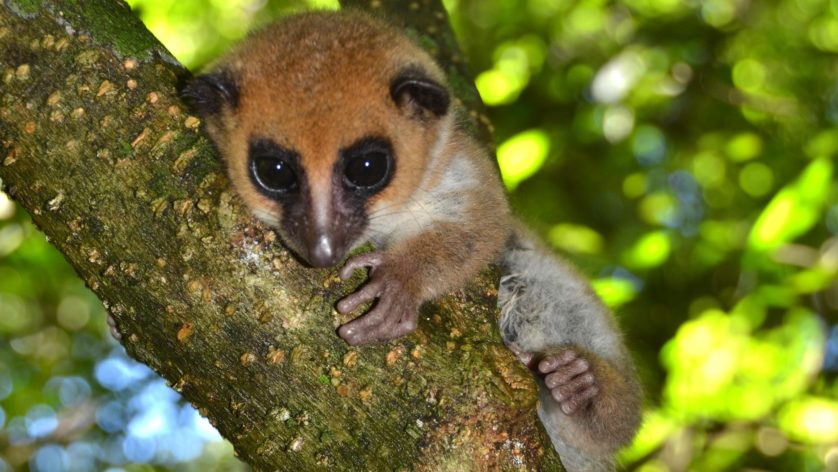 novas especies animais descobertas 10