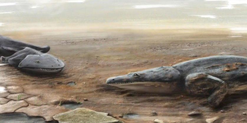 novas especies animais descobertas 4
