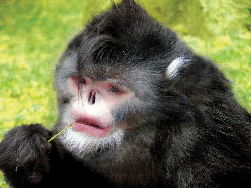 novas especies animais descobertas 9