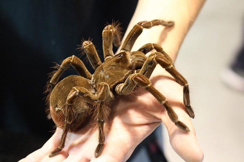 aranhas bizarras 2