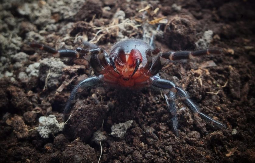 aranhas bizarras 4
