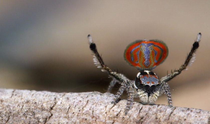 aranhas bizarras 5-