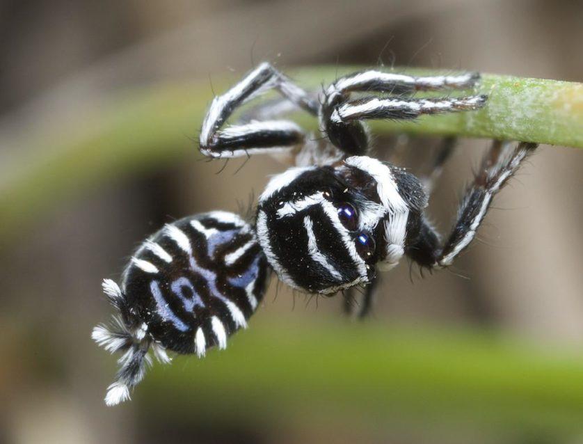 aranhas bizarras 5