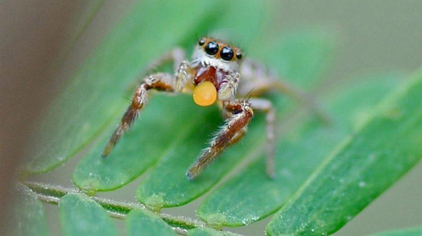 aranhas bizarras 6