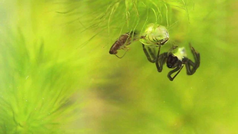 aranhas bizarras 7
