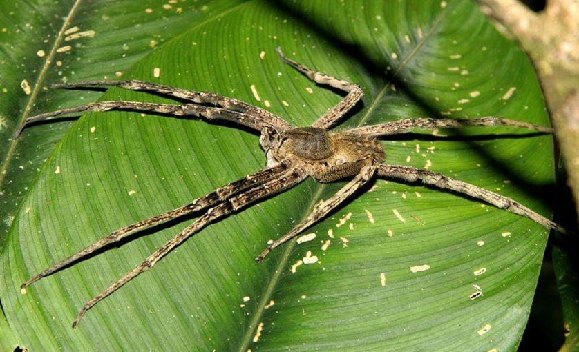 aranhas bizarras 9