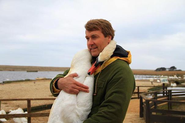 cisne abraca homem que o ajuda (1)