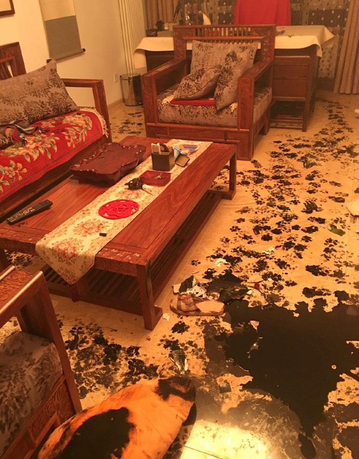 donos fora husky redecora casa 3