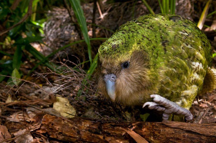 animais mais feios em perigo de extincao 2
