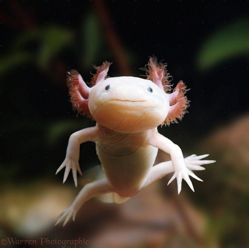 animais mais feios em perigo de extincao 3