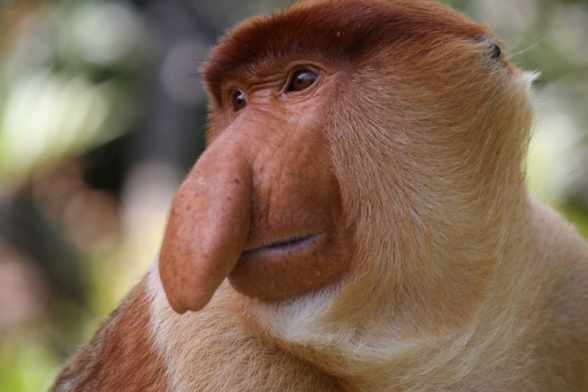 animais mais feios em perigo de extincao 5
