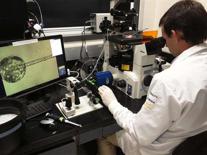 O Dr. Pablo Ross insere células-tronco humanas em embrião de porco para criar embrião quimérico.