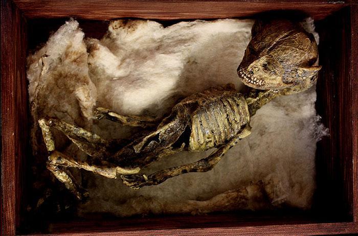 esqueletos criaturas fantasticas esculturas alex cf (4)