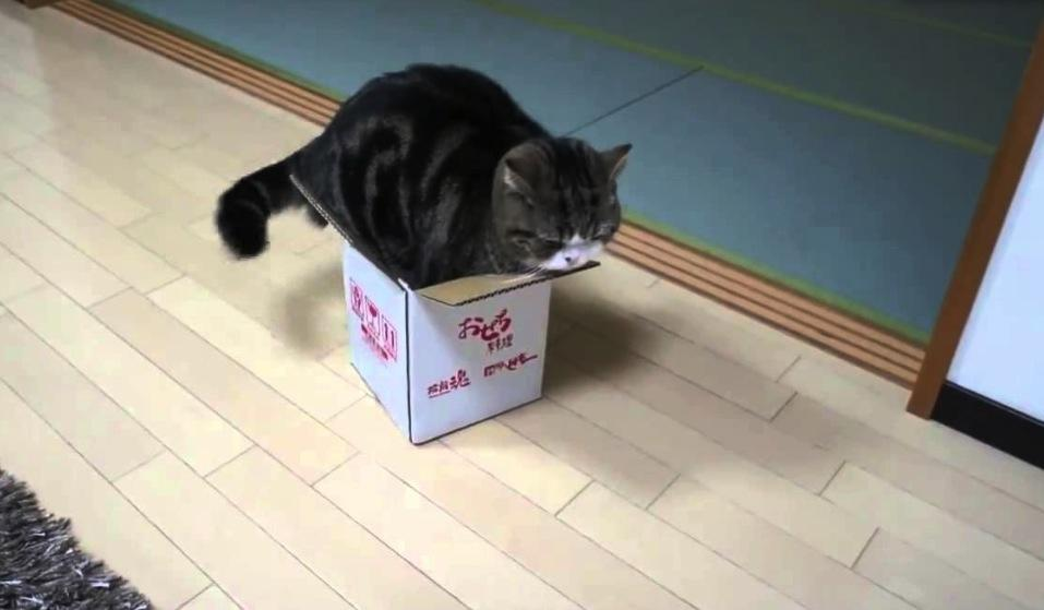 gato na caixa 2