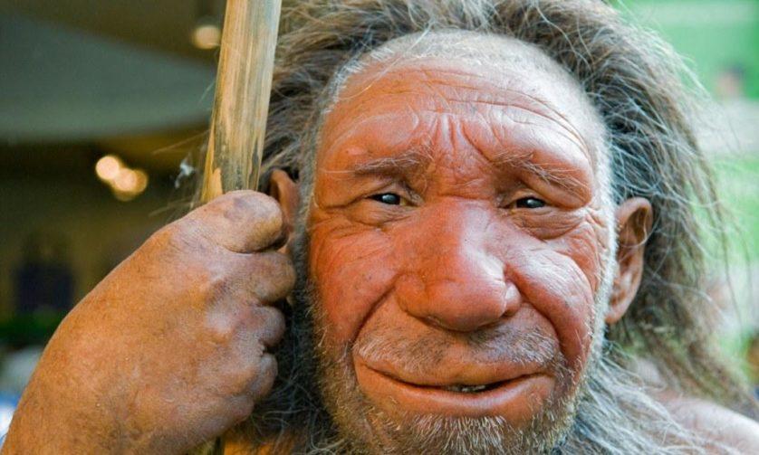 Lifelike figure of a Neanderthal Man in the Neanderthal Museum in Mettmann by Duesseldorf, Northrhine-Westphalia, Germany. Image shot 2006. Exact date unknown.