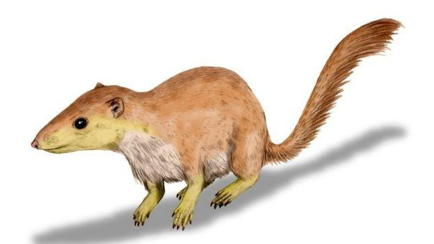Purgatorius unio é um dos mamíferos que viviam com dinossauros