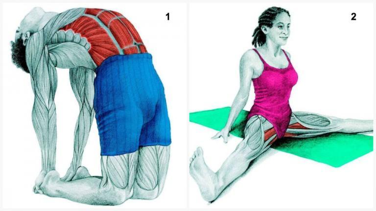 36 exercícios e os músculos que eles alongam